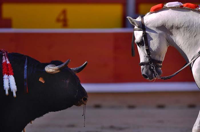 Лошадь с быком