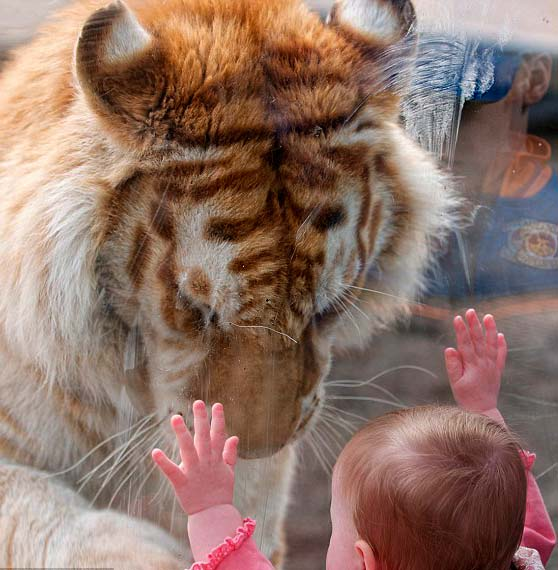 Лошадь с Тигром